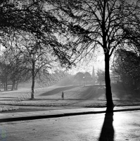 Harrogate, The Stray, Trees